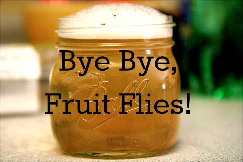 how to make a fruit fly trap best fruits to eat